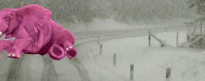 pink elephant in snowy roadway